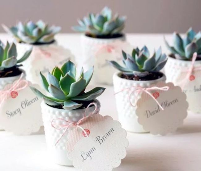 One year party theme with succulent souvenirs