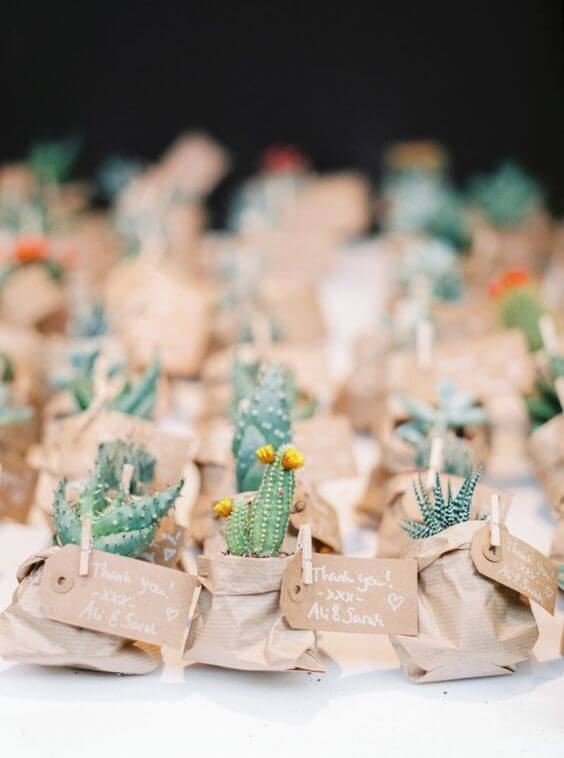 Birthday memories with cactuses and succulents