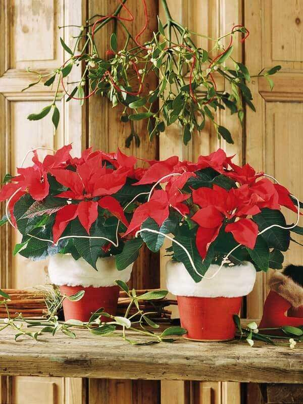 Christmas flower and Santa Claus vase