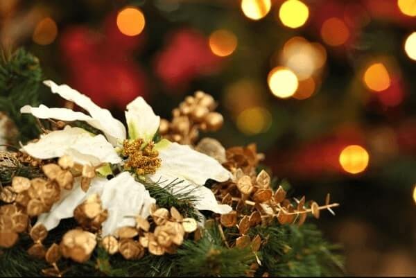White Christmas flower