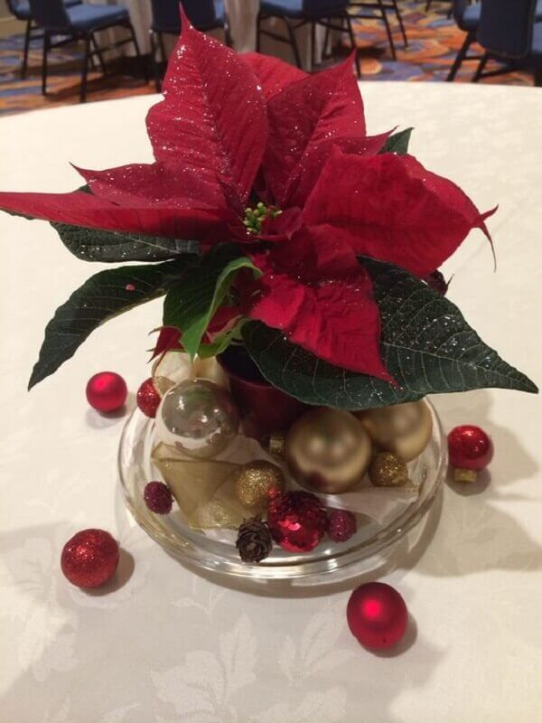 Christmas flower poisentia in small pot