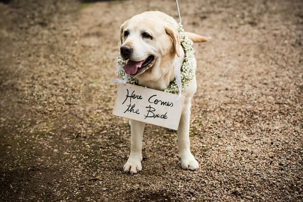 Dog holding the wedding sign announcing the bride's entrance